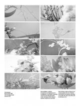 Das Ikebana Orakel 50x67